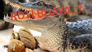 getlinkyoutube.com-TUTORIAL ROTI BUAYA