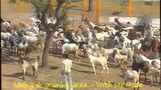 getlinkyoutube.com-Goat Farm - malf