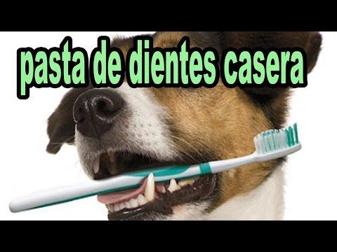 Pasta De Dientes Casera Para Perros Lava Los Dientes A Tu Perro