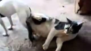 perro pegado con gata.