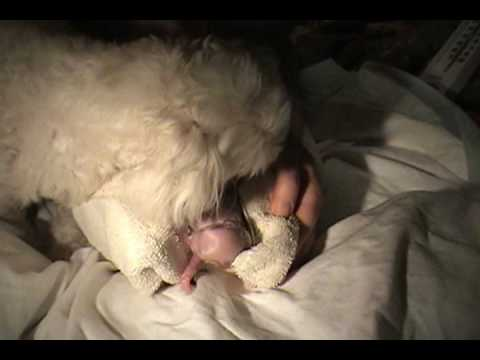 Amazing Dog Birth!!