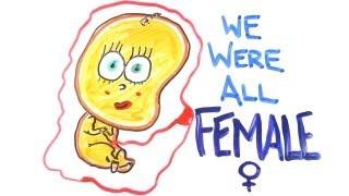 We zijn allemaal vrouwen