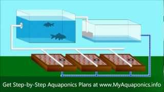 getlinkyoutube.com-DIY Aquaponics | Do It Yourself Aquaponics Systems | Starter Kit