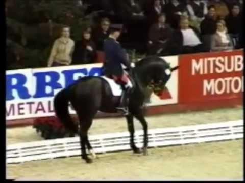 DON FREDERICO: Hannover dressage stallion by Donnerhall, www.equine-evolution.com