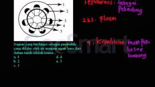 getlinkyoutube.com-Struktur dan fungsi jaringan Xilem dikotil