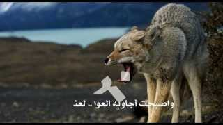 getlinkyoutube.com-الذيب يا يمه عوا