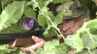 getlinkyoutube.com-Fieldsports Britain - Hunting pigeons with airguns and the history of pheasant shooting