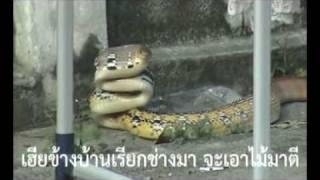 getlinkyoutube.com-เจองูเข้าบ้าน อย่าตี