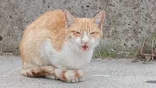 getlinkyoutube.com-猫風邪になった野良猫の結末 Outcome of stray cat that became cat coldFVR FCV【瀬戸の野良猫観察記】