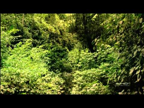 Tropical Rainforest IMAX  HD