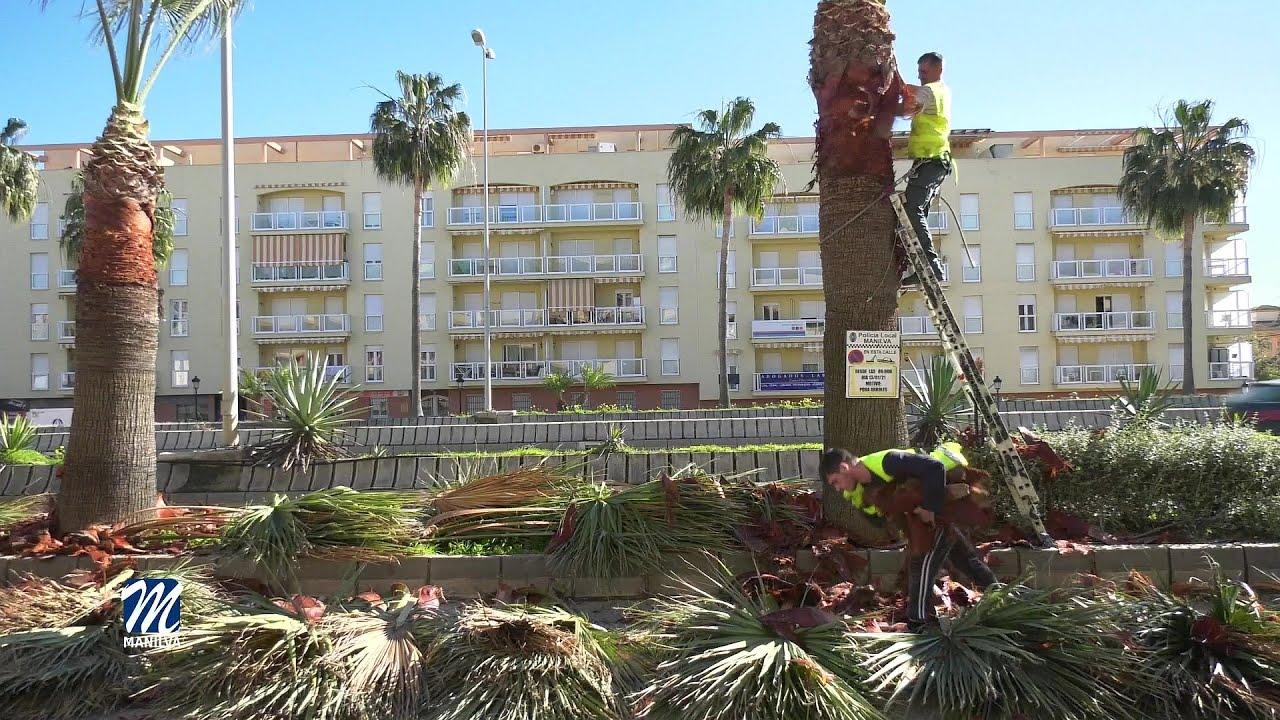 Arreglo de camino rurales y poda de palmeras
