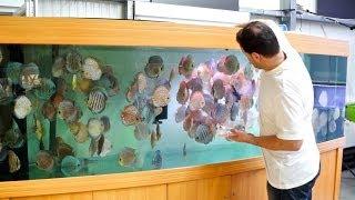 3000 Liter Diskus-Aquarium | 800 Gallon Discus Tank