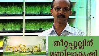 getlinkyoutube.com-Hydroponics Green Fodder Feeding Technology