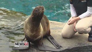 getlinkyoutube.com-Mystic Aquarium celebrates World Oceans Day