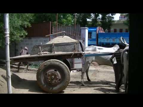 Ox Cart  Sand  Delivery at Barathi Hostel in India