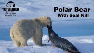 getlinkyoutube.com-Polar Bear with Seal Kill