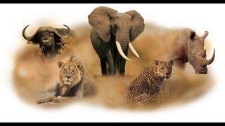 getlinkyoutube.com-The Big 5 of Africa
