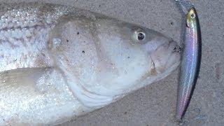 getlinkyoutube.com-Striped Bass Lures - Daiwa Salt Pro Minnow (floater)
