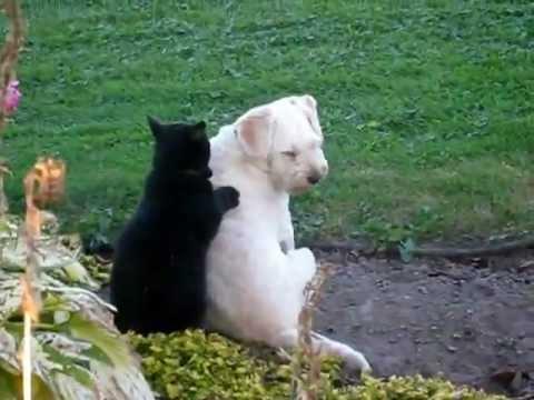My cat massaging my dog