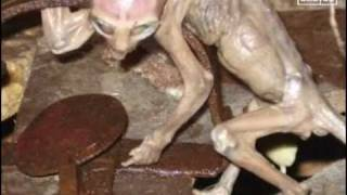 getlinkyoutube.com-'Baby' Alien found by farmer in Mexico - DNA tests and scans baffles scientists