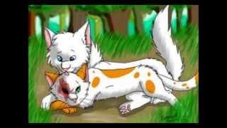 getlinkyoutube.com-warriors cats top 10 cutest couple