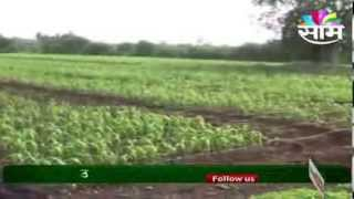 getlinkyoutube.com-Jowar Cultivator Dr.S.R. Ghadak guides on how to increase jowar production