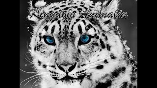 getlinkyoutube.com-Kingdom Animalia อาณาจักรสัตว์ Part1