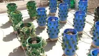 getlinkyoutube.com-تقرير عن نظام الزراعة المائية في رام الله
