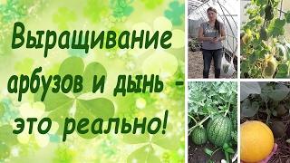 Выращивание арбузов и дынь - это реально! (семинар, основные правила)