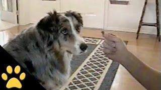 getlinkyoutube.com-Smart Dog Refuses To Take Treats From The Dog Catcher
