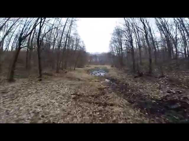 SCENES Firewall Wiosna w lesie 2015
