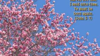 Song They overcame with blood of Christ church life hymn