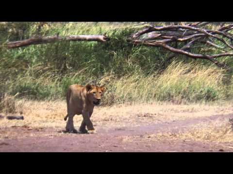 Africa 2014: The Wildlife