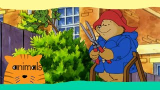 getlinkyoutube.com-Paddington Bear - Paddington Takes a Cut