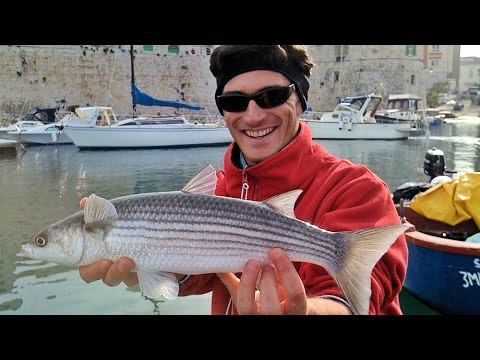Weekend di Pesca in mare al Cefalo in Porto di Molfetta e Giovinazzo - Pescanet.it