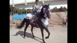 getlinkyoutube.com-tbourida cheval