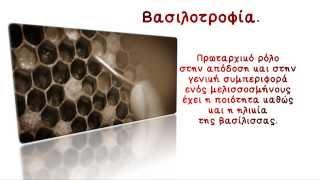 getlinkyoutube.com-Αποσπάσμα από το DVD η μελισσοκομία βήμα βήμα. (Βασιλοτροφία)
