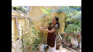 getlinkyoutube.com-സ്വന്തം അടുക്കളത്തോട്ടം - ഡോക്ടര് മരിയ ലിസ്സ മാത്യൂ
