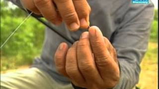 getlinkyoutube.com-สารคดีตกปลา GM ตอน ยี่สกภูเขา