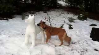 getlinkyoutube.com-Kelsey meets Snow Dog