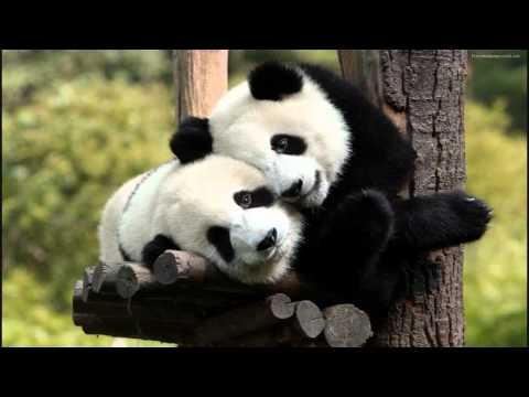 musica y videos de panda: