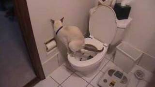 Cat using toilet & toilet paper