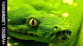 getlinkyoutube.com-World's 10 Most Dangerous Snakes (with SnakeBytesTV)