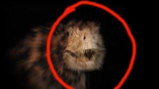 getlinkyoutube.com-TOP 4 Real Dinosaurs Caught On Camera Alive Dinosaurs In Real Life 风行照相机恐龙活在现实生活中最常见的4恐龙实