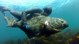 getlinkyoutube.com-Spearfishing Halibut in Norway