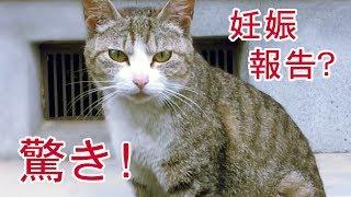 getlinkyoutube.com-感動!野良猫チョロちゃん 妊娠!報告に来た?「ママになります! 」 - Cute Feral cat will soon become a mom. 2016 06 07