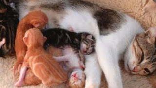 getlinkyoutube.com-cat birth 1   (kedi doğumu 1)
