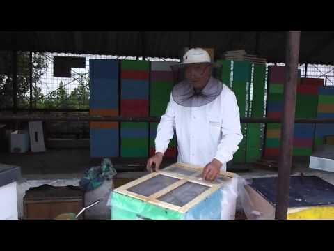 Mirel, tanarul meu apicultor ucenic, vrea sa afle mai multe despre inmultirea familiilor de albine
