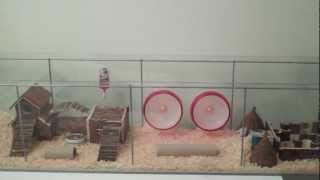 getlinkyoutube.com-Huge Habitat for Roborovski Hamsters (from Ikea)