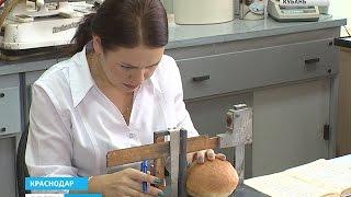 Кубань в следующем году не останется без хлеба